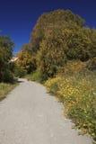 Узкая дорога асфальта окруженная деревьями и цветками Стоковые Фотографии RF