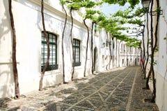 узкая старая лоза улицы Стоковое Фото