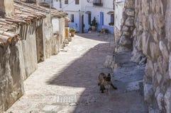 Узкая улица с белизной покрасила дома, типичные этого городка, t Стоковое Изображение RF