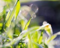 узкая часть травы поля росы глубины Стоковое Изображение