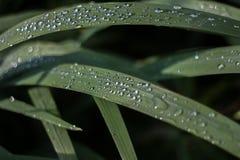 узкая часть травы поля росы глубины Стоковое Изображение RF