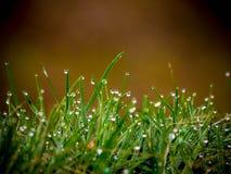 узкая часть травы поля росы глубины Стоковое Фото