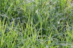 узкая часть травы поля росы глубины Стоковые Фото