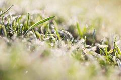 узкая часть травы поля росы глубины Стоковая Фотография RF