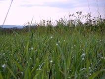 узкая часть травы поля росы глубины стоковая фотография