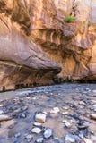 Узкие части в национальном парке Сиона, Юте, США Стоковые Изображения RF