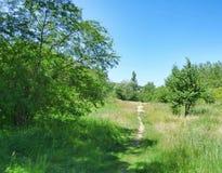 Узкий путь дальше среди травы и деревьев Стоковое Изображение RF