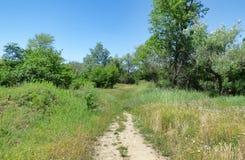 Узкий путь дальше среди травы и деревьев Стоковое фото RF