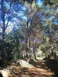 Узкий путь среди деревьев стоковые изображения
