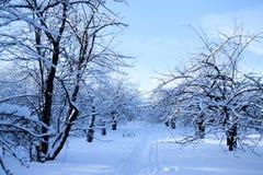 Footpath в парке Стоковая Фотография RF