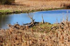 Узкое река с болотистым побережьем Стоковая Фотография RF