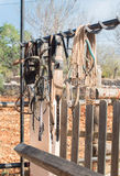Уздечки лошади Стоковое фото RF