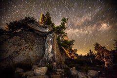 Узловатое дерево против звездной ночи Стоковые Изображения RF