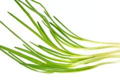 луки пука свежие зеленые Стоковая Фотография