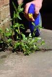 Укомплектуйте личным составом распыляя деланную пи-пи убийцу на засоритель Стоковая Фотография RF