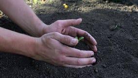 Укомплектуйте личным составом руки ` s засаживая саженцы в почву над черной предпосылкой сток-видео