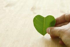 укомплектуйте личным составом руку держа лист зеленого цвета формы сердца, концепцию дня земли концепция давать и здоровья Стоковые Фотографии RF