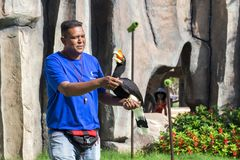 Укомплектуйте личным составом тренера птиц с делать фокусы toucan на выставке VI ` s птицы Стоковые Изображения RF