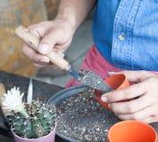 Укомплектуйте личным составом в рубашке джинсов держа садовые инструменты, садовничая кактус в баке Стоковое Фото