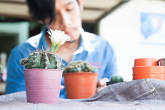 Укомплектуйте личным составом в рубашке джинсов держа садовые инструменты, садовничая кактус Стоковое Изображение RF