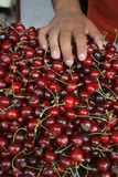 Укомплектуйте личным составом держать вишню в руке, вишне свежих вишен естественной на уличном рынке Стоковые Изображения RF