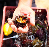 Укомплектуйте личным составом держать мальчишкаа моря с лимоном для еды его Стоковые Фото