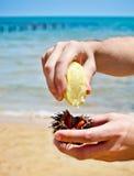 Укомплектуйте личным составом держать мальчишкаа моря для еды его на пляже Стоковая Фотография