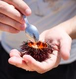 Укомплектуйте личным составом держать мальчишкаа моря для еды его на пляже Стоковая Фотография RF
