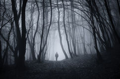 Укомплектуйте личным составом идти в лес хеллоуина загадочный с туманом Стоковая Фотография