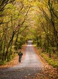 Укомплектуйте личным составом идти вдоль дороги в лесе Стоковое Изображение