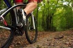 Укомплектуйте личным составом катание велосипедиста на велосипеде в лесе лета Стоковые Изображения
