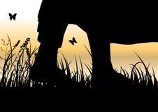 Укомплектуйте личным составом размышлять в сидя положении йоги на верхней части горы над облаками на заходе солнца Дзэн, раздумье стоковое изображение