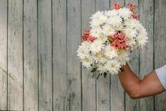Укомплектуйте личным составом руку ` s с букетом белой хризантемы на деревянной предпосылке Стоковая Фотография RF