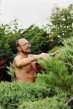 Укомплектуйте личным составом садовника с клиперами в руке делая можжевельник вырезывания искусства стоковое фото rf