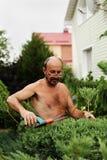 Укомплектуйте личным составом садовника с клиперами в руке делая можжевельник вырезывания искусства стоковая фотография rf