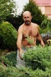 Укомплектуйте личным составом садовника с клиперами в руке делая можжевельник вырезывания искусства стоковое изображение rf