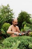 Укомплектуйте личным составом садовника с клиперами в руке делая можжевельник вырезывания искусства стоковая фотография