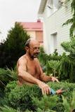 Укомплектуйте личным составом садовника с клиперами в руке делая можжевельник вырезывания искусства стоковые фотографии rf