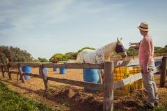 Укомплектуйте личным составом штриховать белую лошадь с мешочком из ткани то заволакивание его ey Стоковые Фотографии RF