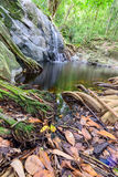 Укорените дерево на малом водопаде в сухом seasom стоковое фото