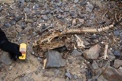 Украина Зона отчуждения Чернобыль - 2016 03 20 Fishbones и дозиметр Стоковое фото RF