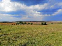 Украинские поля стоковые фотографии rf