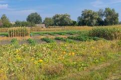 Украинский ландшафт страны с огородом в сельском районе Стоковое Изображение RF