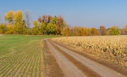 Украинский ландшафт страны с 2 сезонными полями Стоковая Фотография