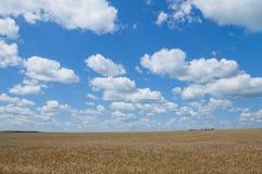 Украинский ландшафт с пшеничным полем Стоковое Изображение