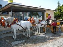 4 украсили лошадей ждать вне туристического офиса Стоковое Изображение