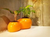 Украсьте оранжевого цветочного горшка стоковое фото rf