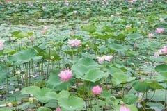 украсьте пруд лотоса взгляда отдыха сада Стоковое фото RF