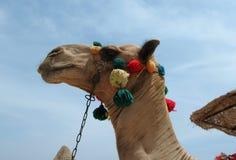 Украшанная голова верблюда Стоковое Изображение RF