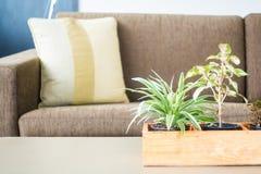 Украшение завода вазы в комнате Стоковые Фото